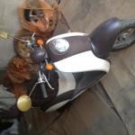 Honda Crea Scoopy AF55 N537